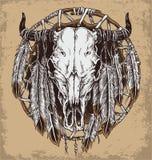 Crâne de vache et illustration tirés par la main de plumes Photographie stock libre de droits