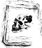 Crâne de vecteur Image libre de droits