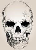 Crâne de vecteur de griffonnage avec facile édité Images stock