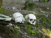Crâne des personnes de Kete Kesu Photos libres de droits