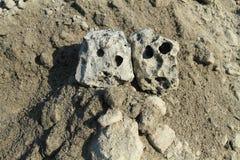 Crâne deux comme une pierre Images libres de droits