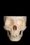 Crâne drôle Photos libres de droits