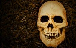 Crâne effrayant de veille de la toussaint Photo stock