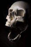 Crâne effrayant de veille de la toussaint Images libres de droits