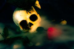 Crâne en brouillard photo stock