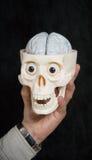 Crâne et cerveau de fixation de main Photographie stock libre de droits