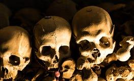 Crâne et os photos libres de droits