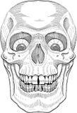 Crâne humain illustration libre de droits