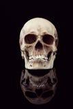 Crâne humain Images stock