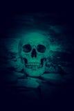 Crâne humain Photographie stock