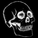 Crâne humain Photographie stock libre de droits