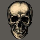 Crâne humain au-dessus de la gravure grise de fond Image stock