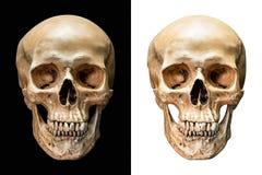 Crâne humain d'isolement Photographie stock libre de droits