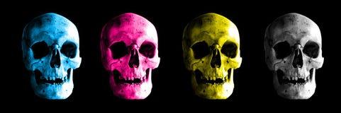 Crâne humain dans des variations de couleur image libre de droits