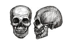Crâne humain, illustration noire et blanche Photo libre de droits
