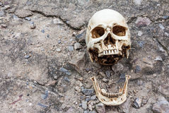 Crâne humain, mâchoire séparée, sur la rue de ciment de fente image stock