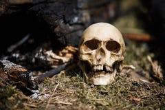 Crâne humain parmi les charbons dans les cendres du feu image stock