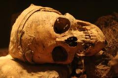 Crâne humain réel Photographie stock libre de droits
