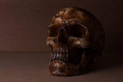 Crâne la vieille en bois toujours vie Images stock
