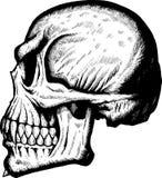 Crâne latéral effrayant illustration libre de droits