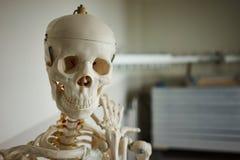 Crâne médical photographie stock libre de droits