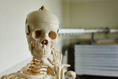 Crâne médical image libre de droits