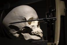 Crâne médical pour des études images libres de droits