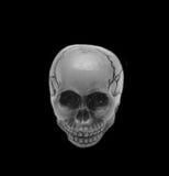 Crâne, noir et blanc Images libres de droits