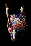 Crâne, Shell et peinture de cerfs communs Photo libre de droits