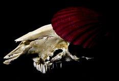 Crâne, Shell et peinture de cerfs communs Images stock