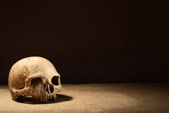 Crâne sur l'obscurité Photo libre de droits
