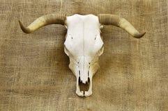 Crâne sur la toile de jute Images libres de droits