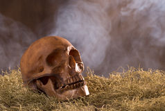Crâne sur le fond fumeux Photos stock