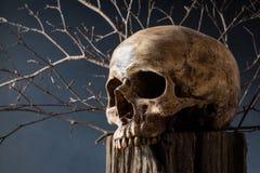 Crâne sur le tronçon d'arbre Photo stock