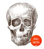 Crâne tiré par la main Photo libre de droits