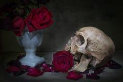 Crâne toujours d'humain de la vie Images libres de droits