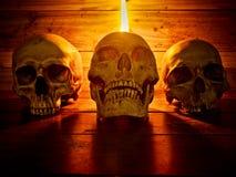 Crâne toujours de la vie Photos libres de droits
