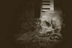 Crâne toujours de musique de la vie Photo libre de droits
