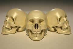 Crânes Photos stock