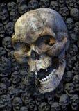 Crânes Images libres de droits