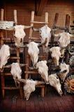 Crânes de vache à vendre Images libres de droits