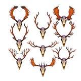 Crânes des cerfs communs femelles et masculins avec des andouillers Photographie stock libre de droits