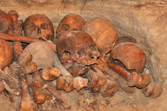 Crânes et os Photo stock