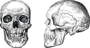 Crânes grunges de vecteur Photos stock