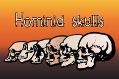 Crânes humains Photos libres de droits
