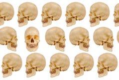 Crânes humains Photographie stock libre de droits
