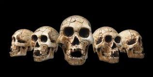Crânes humains réglés Image libre de droits
