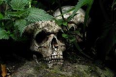 Crânes perdus Images libres de droits