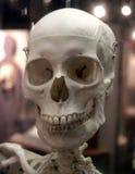 Crânio Imagens de Stock Royalty Free