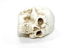 Crânio Fotografia de Stock